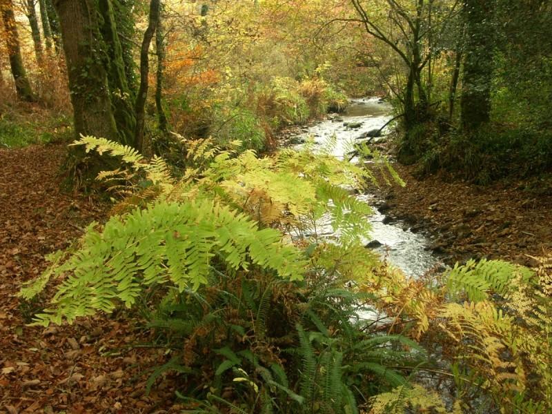 La rivière de Rivoal en Finistère St-riv23