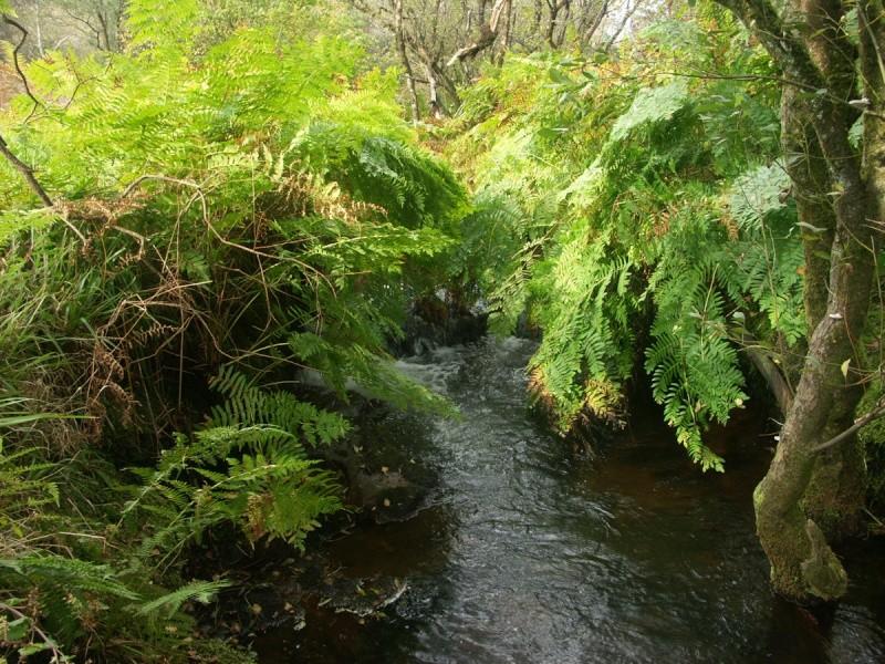 La rivière de Rivoal en Finistère St-riv26