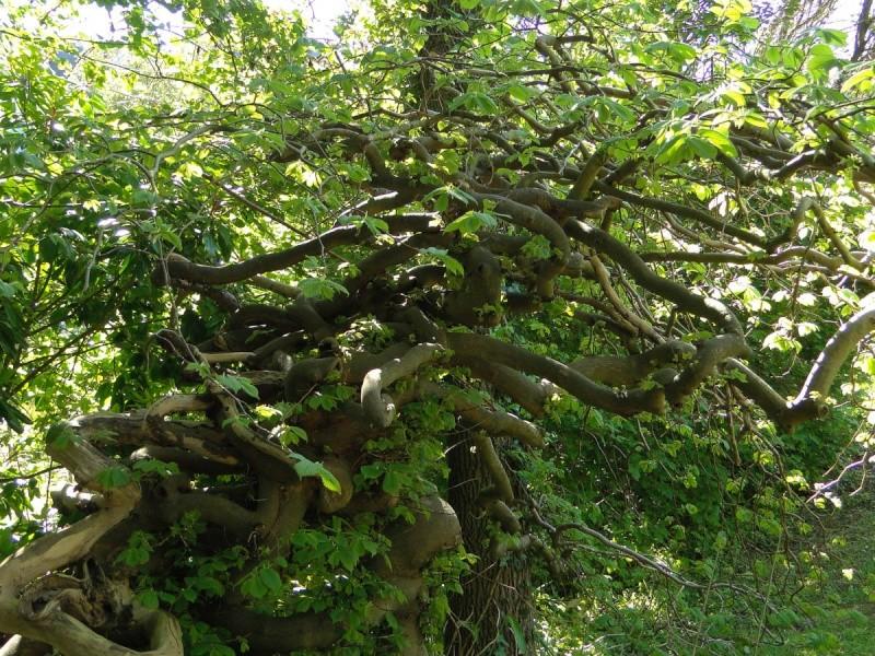 La forêt enchantée... L'esprit des bois Tortue10