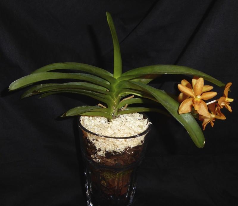 Orchideen in Glasvasen 4 (SGK) - Seite 2 P1030522