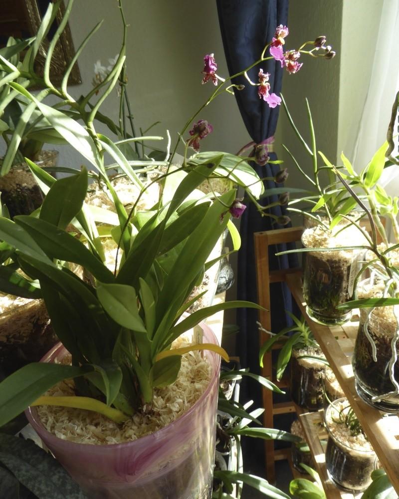 Orchideen in Glasvasen 4 (SGK) - Seite 4 P1030524