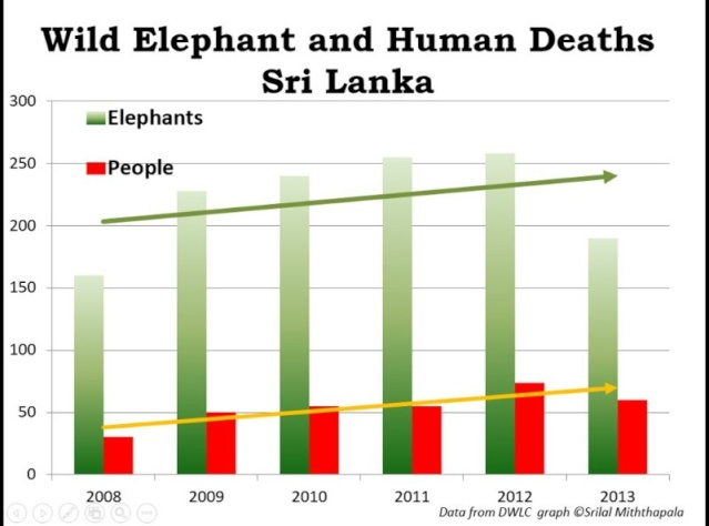 Human Elephant conflict results in the death of over 1 wild elephant each 2 days Aaeaaq12