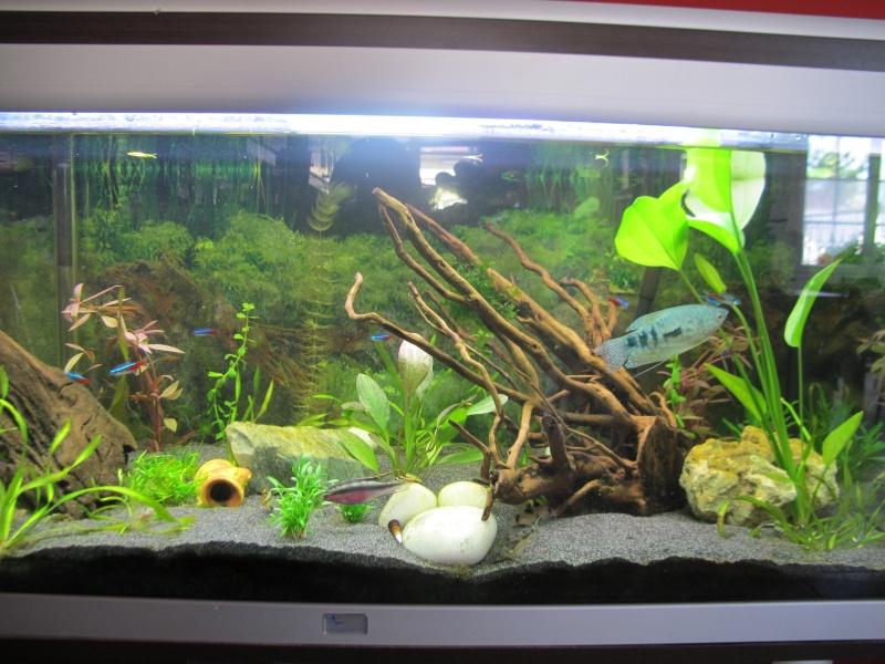 algues pinceaux sur tout le décor - Page 3 Img_5610