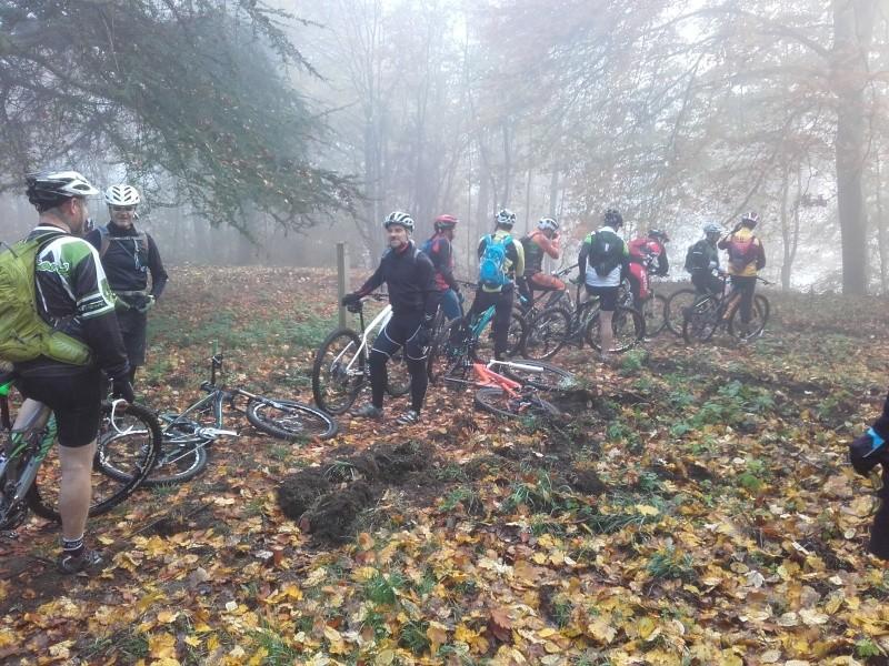 Forêt de Compiègne le 1 novembre 2015 - Page 6 20151110