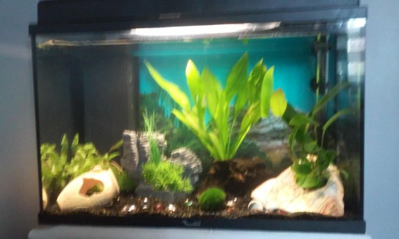 Evolution de mon aquarium et aquascaping !  20150613