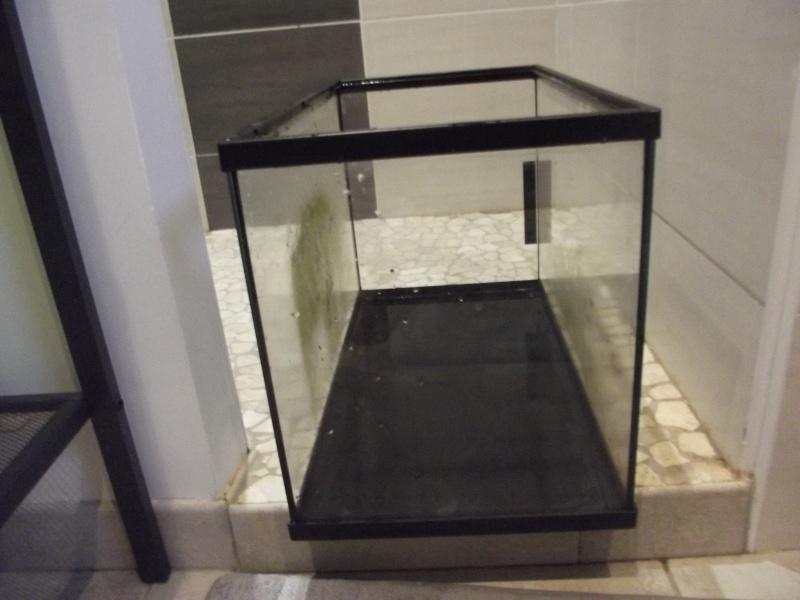 Evolution de mon aquarium et aquascaping !  Dscf5711