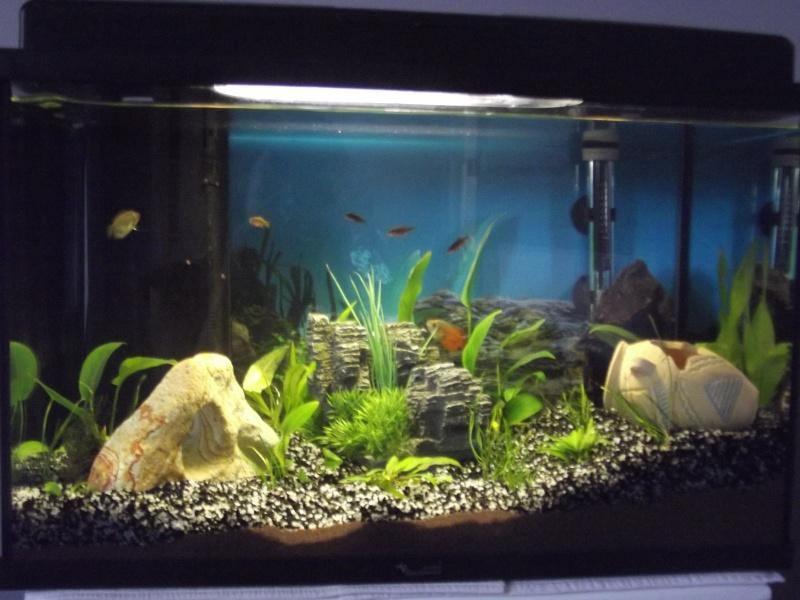 Evolution de mon aquarium et aquascaping !  Dscf5712