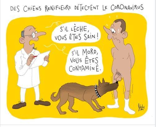 Covid-19: des chiens renifleurs dès cet été en France, espère le ministère de la Santé D3592e10