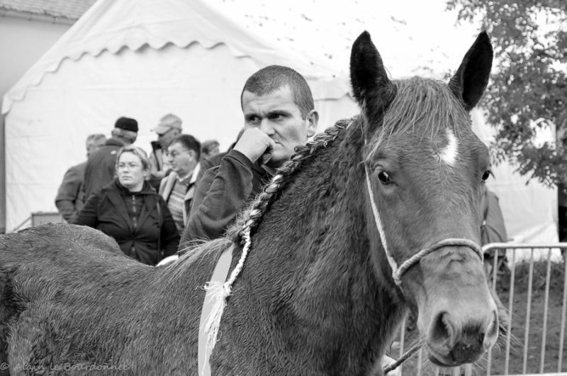 Kerien foire aux chevaux 17102012