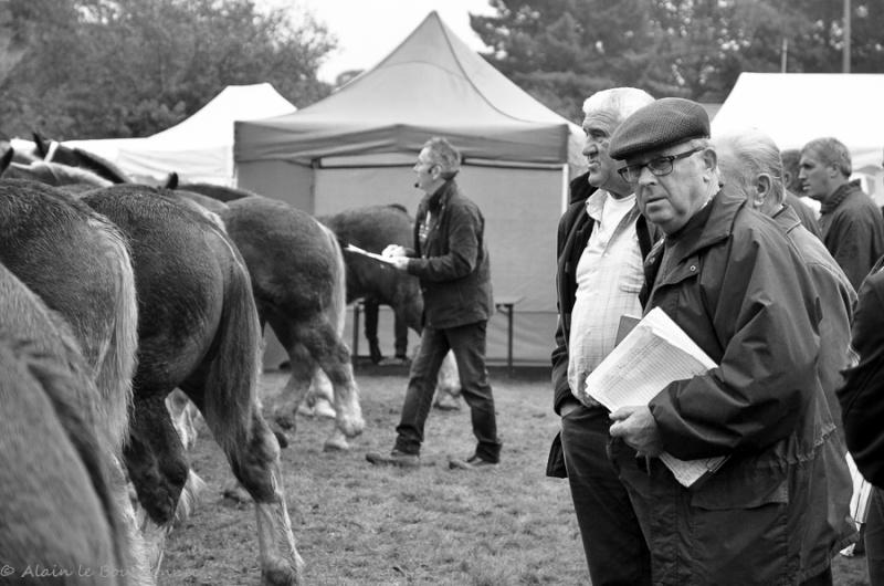 Kerien foire aux chevaux 17102014