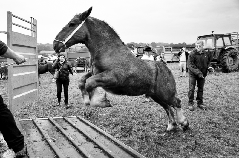 Kerien foire aux chevaux 17102015