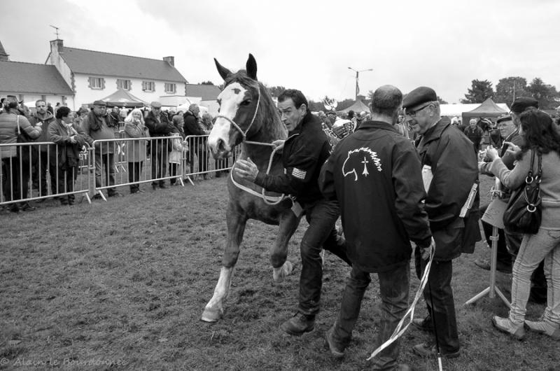 Kerien foire aux chevaux 17102018