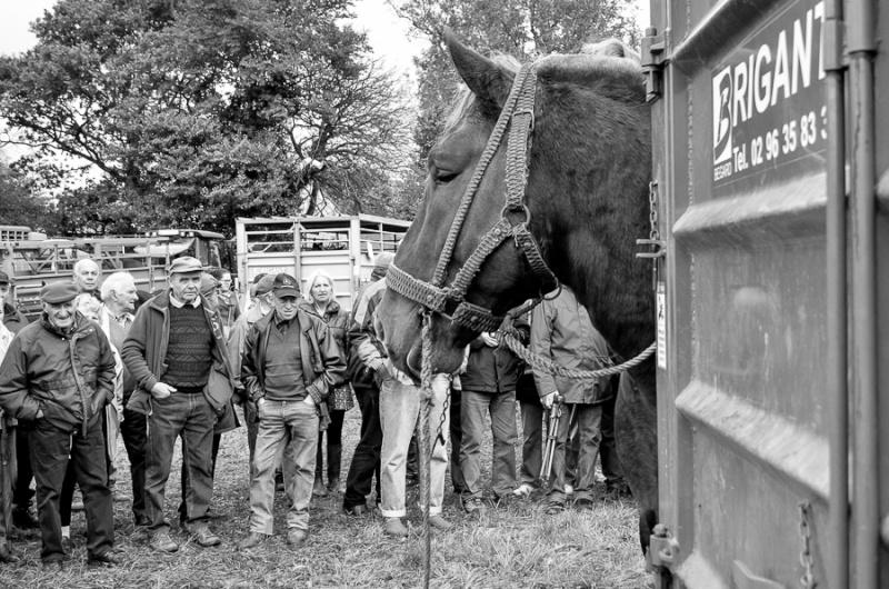 Kerien foire aux chevaux 17102021