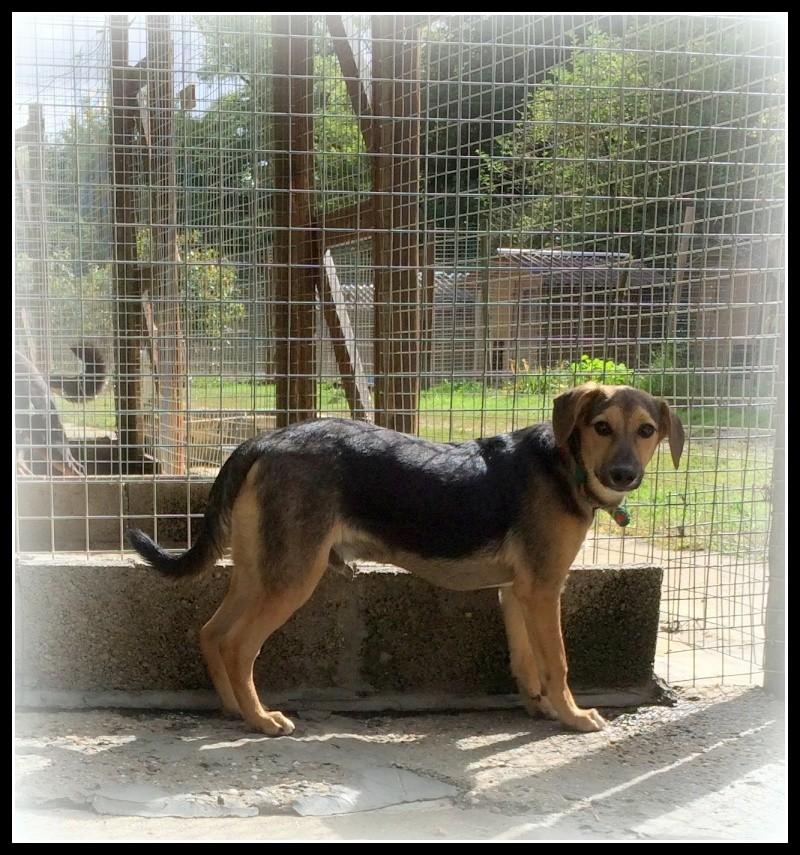 LENNING - x berger 4 ans (4 ans de refuge  Refuge des Clochards Poilus à Tabanac (33) Img_5111