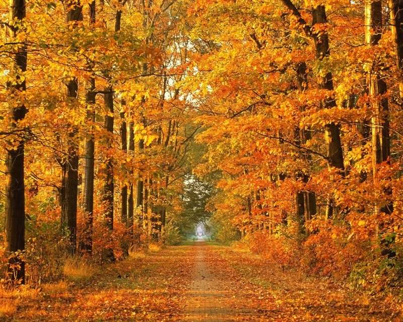 l'automne 545fea10
