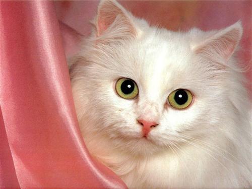 les chats 54a96f10