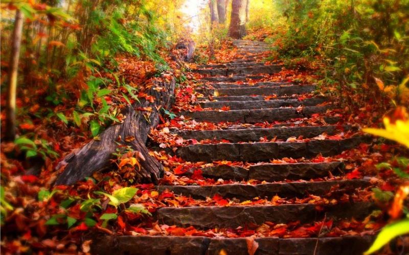 l'automne Alain11