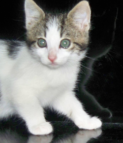 les chats Chat1010