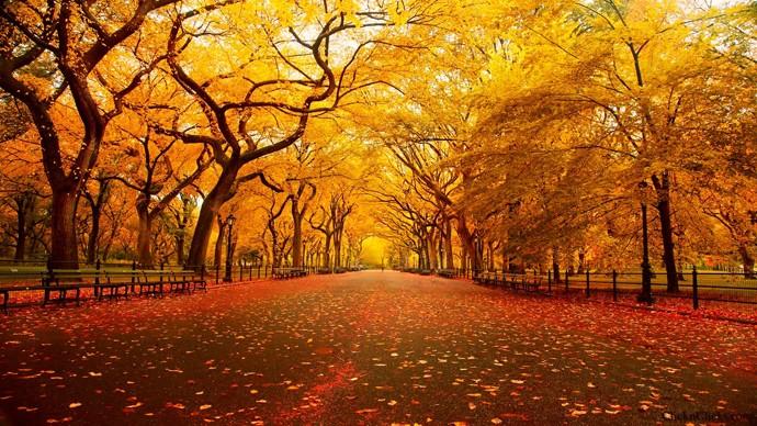 l'automne Fete-g11
