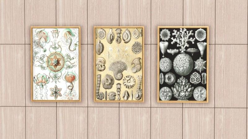 Ernst Haeckel Paintings for Sims 3 by Vanadis 2vvt7w10