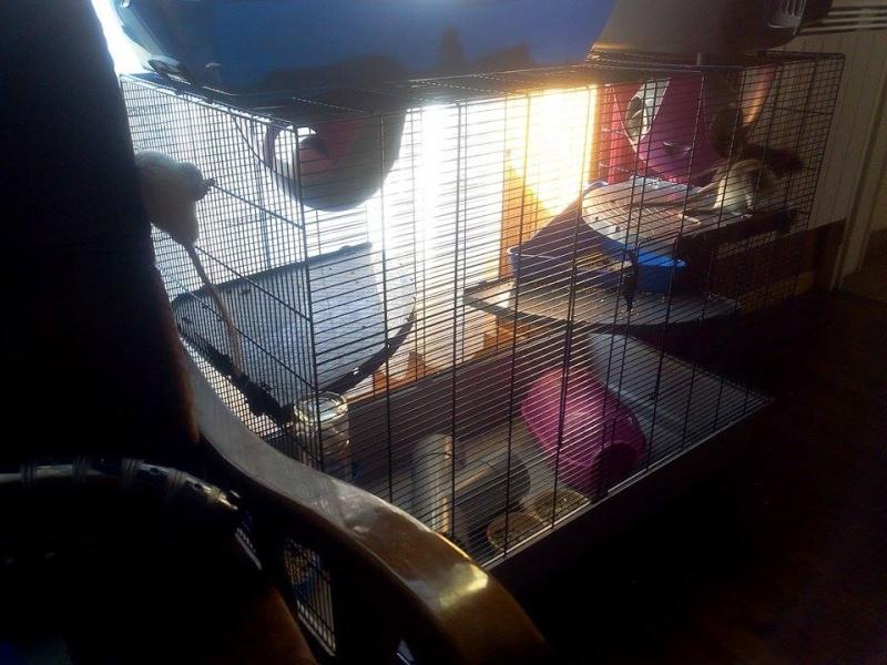 *VENDUE* cage Freddy 3  12053210