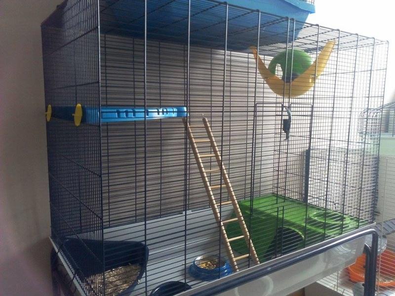 *VENDUE* cage Freddy 3  12071610