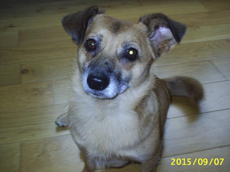 ANDALOUSIE femelle croisée chihuahua née en 2012 (Pascani)- adoptée par Cindy (dpt67) - Page 4 Anda110
