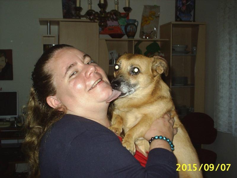 ANDALOUSIE femelle croisée chihuahua née en 2012 (Pascani)- adoptée par Cindy (dpt67) - Page 4 Anda210