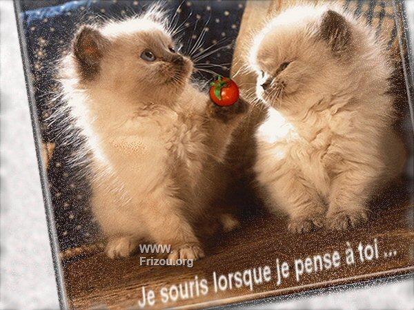citation image Je_sou11