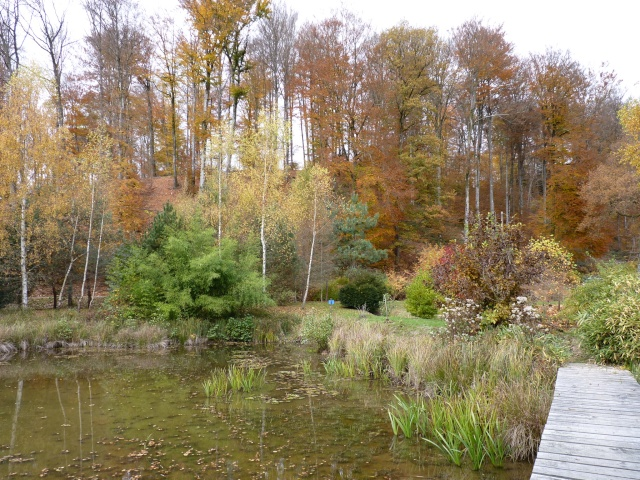 Ambiance automne 2015 - Page 7 P1040121