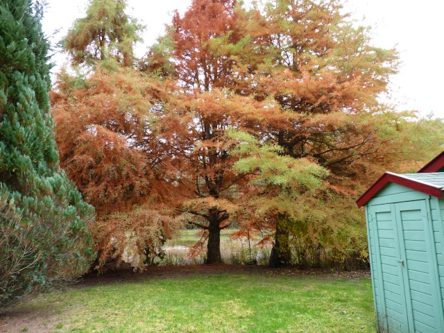 Ambiance automne 2015 - Page 7 P1040122
