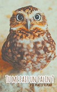 Cabinet de Curiosités~ Owl10