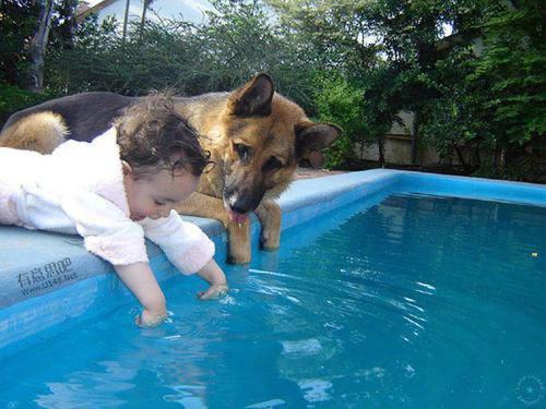 Les chiens Baby Sitters.. Magnifique... 0110