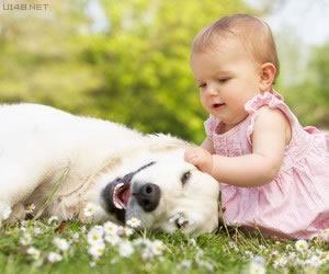 Les chiens Baby Sitters.. Magnifique... 0510