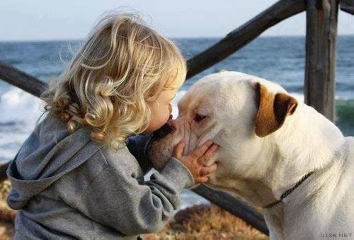 Les chiens Baby Sitters.. Magnifique... 0810