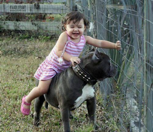 Les chiens Baby Sitters.. Magnifique... 0910