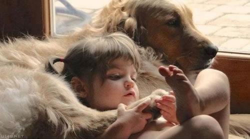 Les chiens Baby Sitters.. Magnifique... 1011