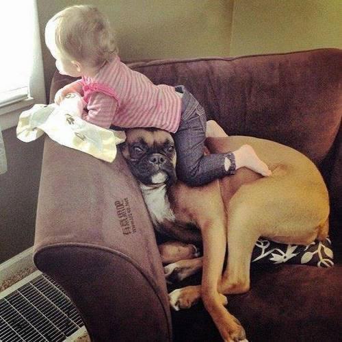 Les chiens Baby Sitters.. Magnifique... 1112