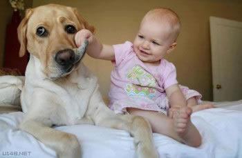 Les chiens Baby Sitters.. Magnifique... 1212
