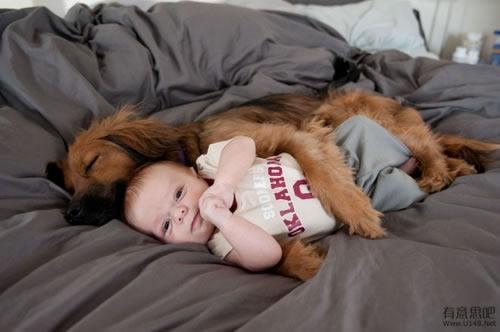 Les chiens Baby Sitters.. Magnifique... 1412