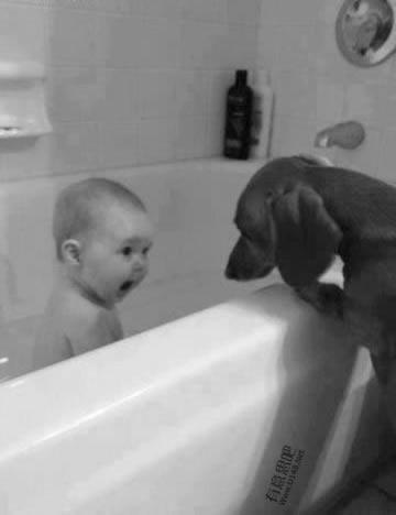 Les chiens Baby Sitters.. Magnifique... 2013