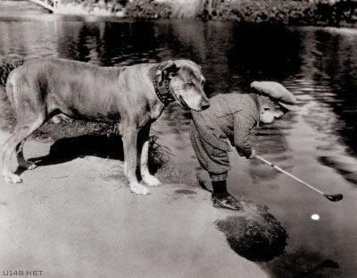 Les chiens Baby Sitters.. Magnifique... 2211