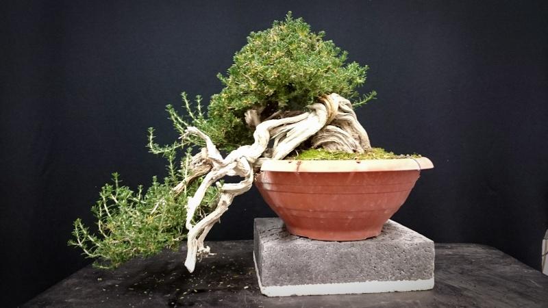 TIMO ... futuro bonsai ... - Pagina 2 _2015111
