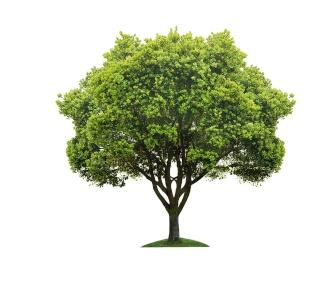 Quel type de pensée utilisez vous le plus ? Tree10