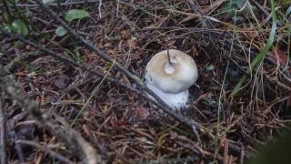 Ma première sortie champignons 3_sept10