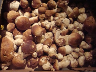 Ma première sortie champignons Dsc04011