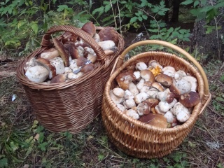 Ma première sortie champignons Dsc04012