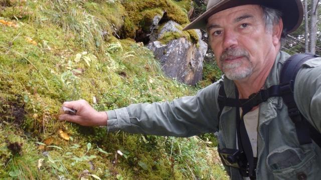 Belle cueillette de chanterelles en montagne P9192810