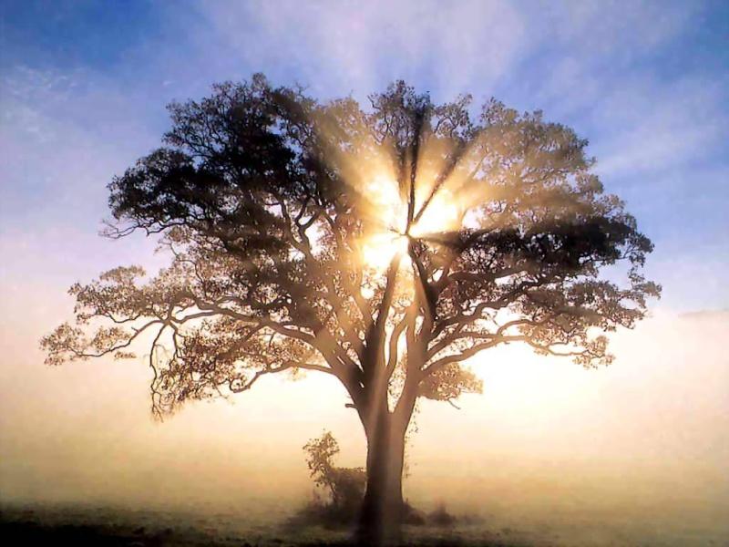A Sabedoria da Kabbalah - Página 2 Arvore10
