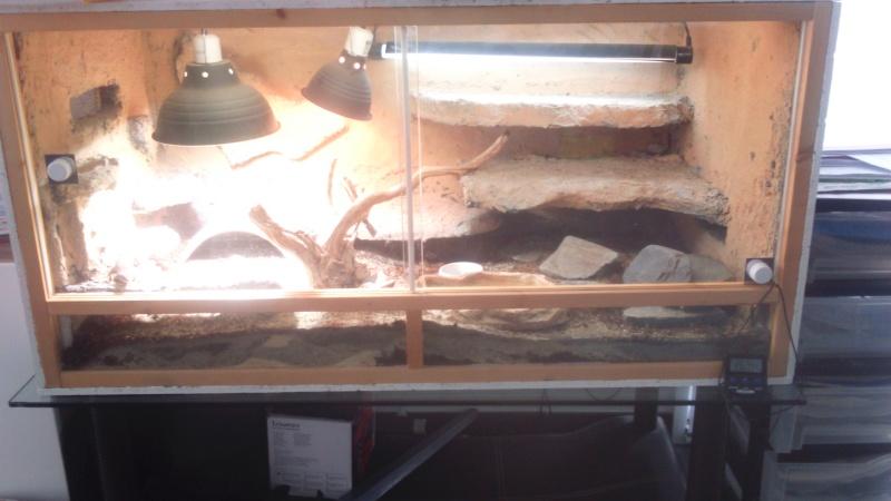 taille terrarium  et maintenance acanthurus Dsc_0011